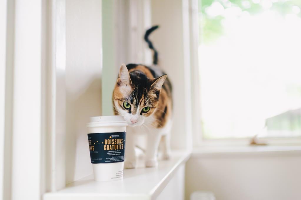 Une pause café?